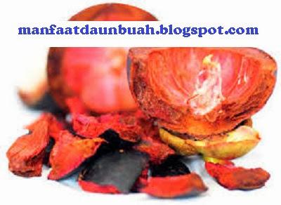 Manfaat dan Khasiat Kulit Manggis untuk Kesehatan Tubuh | Obat ...