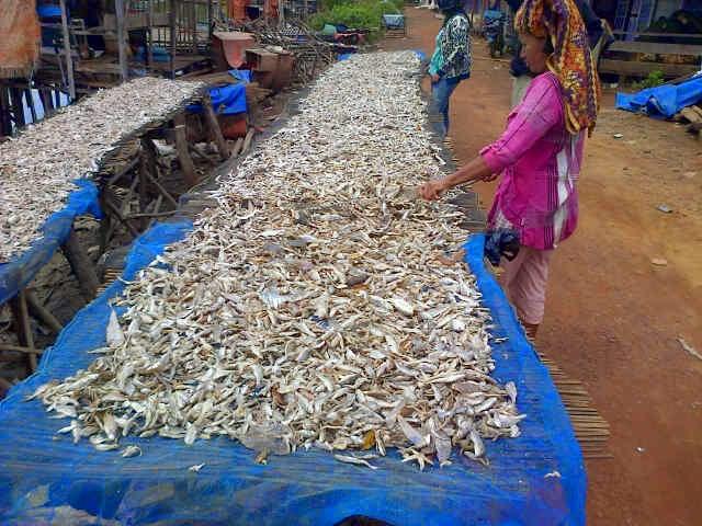 Aktifitas di tempat pengumpulan ikan dan pemilahan di banjarmasin