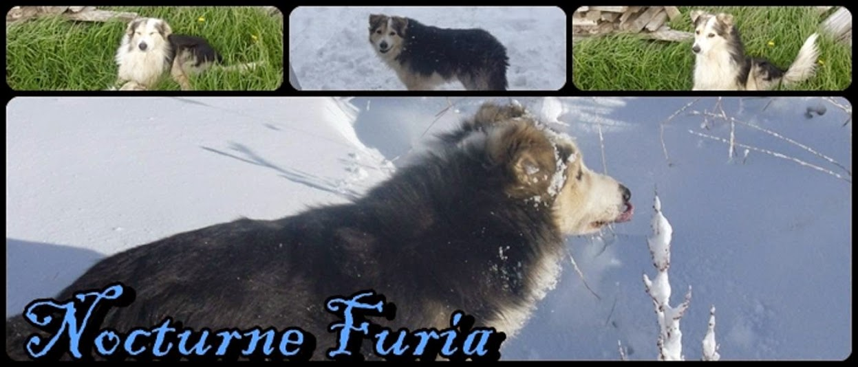 Nocturne Furia