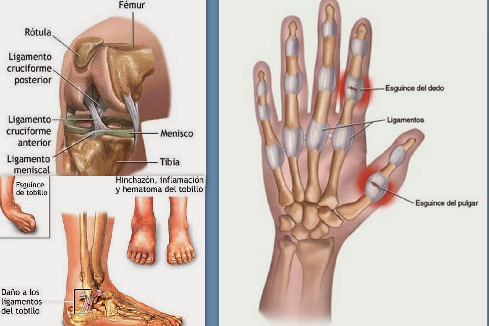 Lujoso Ligamentos En La Anatomía Pulgar Galería - Anatomía de Las ...