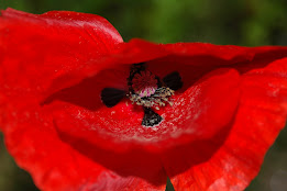Flores & Jardins by A. Campeão