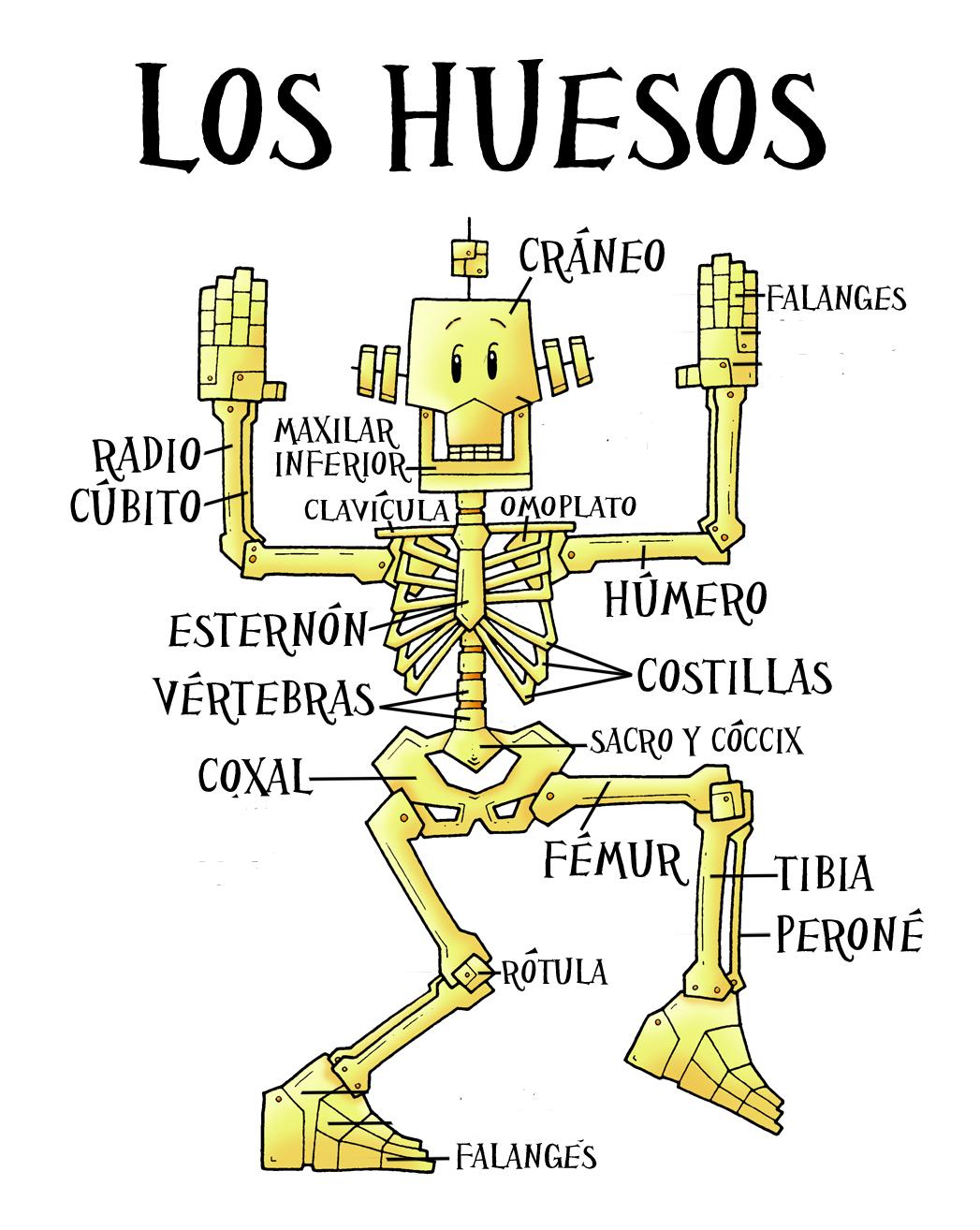 Ciencias Sociales, Naturales y Plástica: EL ESQUELETO HUMANO, para ...