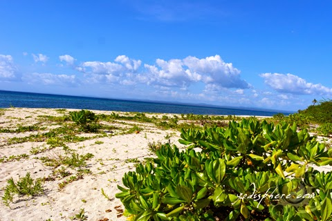 hover_share Beach vegetation at Mongpong island beach