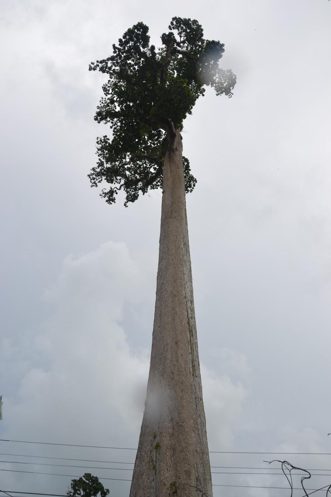 Agusan Del Sur: Giant ...