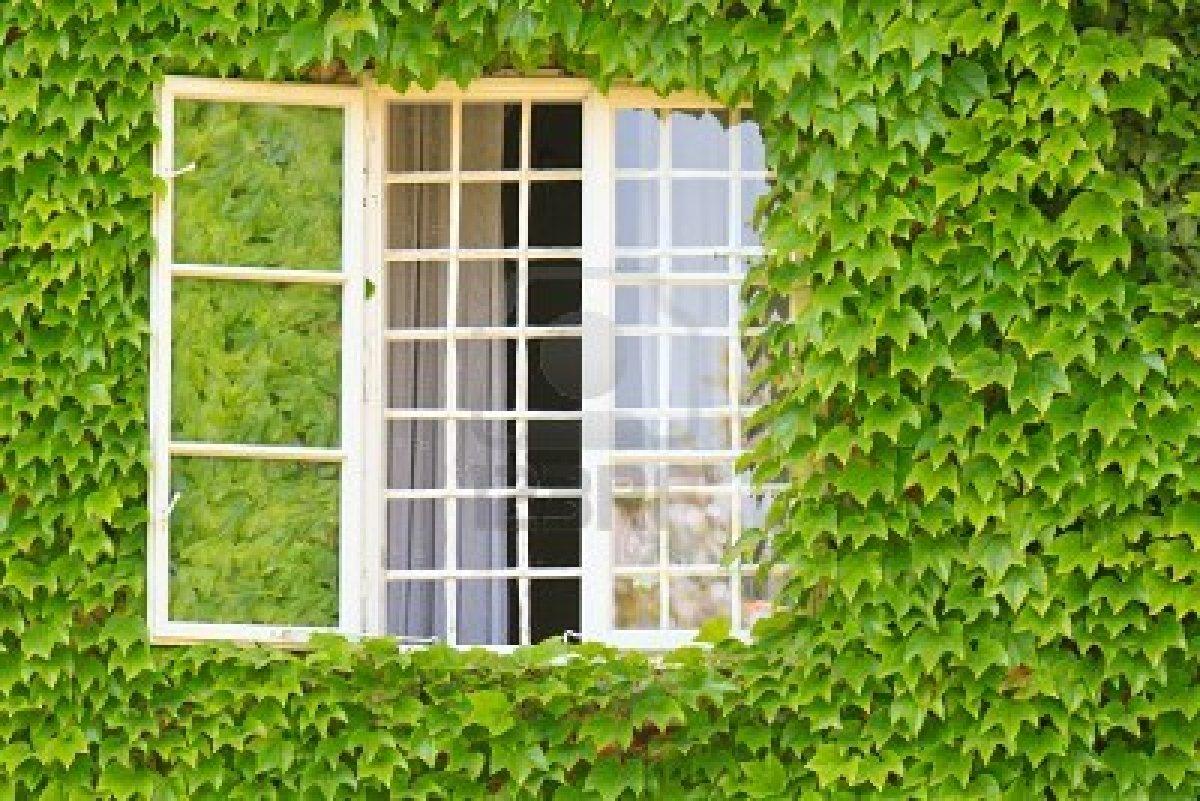 Arte y jardiner a plantas trepadoras en el jardin - Plantas trepadoras para muros ...