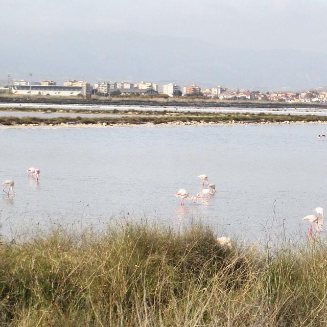Stagno di Molentargius, Cagliari