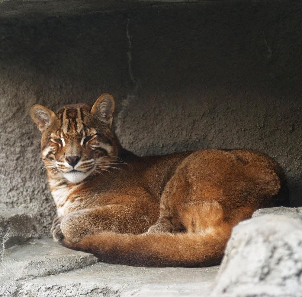 Las mejores mamás animales BBC Mundo - imagenes de animales con sus crias