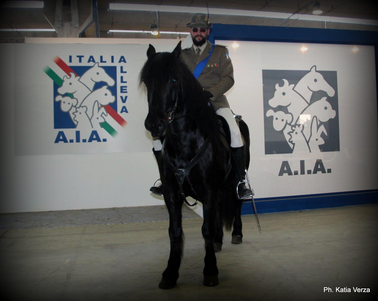 LA VIEILLE ECURIE - ITALIA ALLEVA