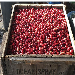 Just Follow the Bouncing Cranberry, shared by On Aunt Mildred's Porch