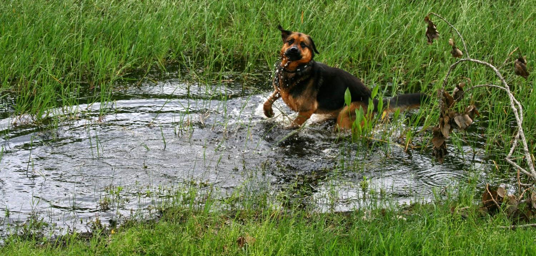 YAY WATER!
