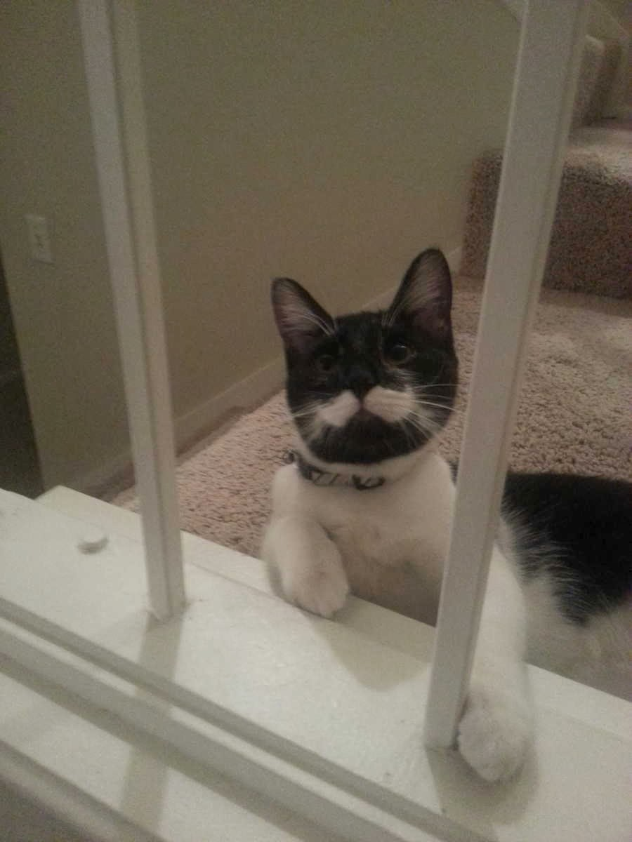 Funny cats - part 82 (40 pics + 10 gifs), cat photo, cat with white mustache
