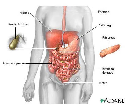 Resumen Anatomia y Fisiologia Digestivo | .