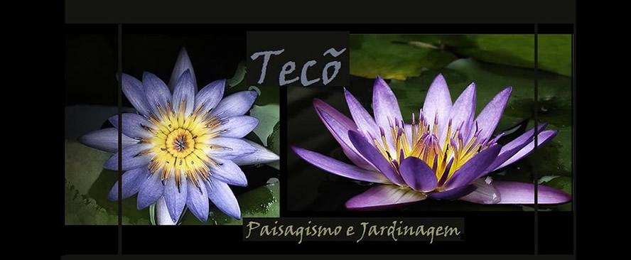 Tc : Blog de Paisagismo e Jardinagem