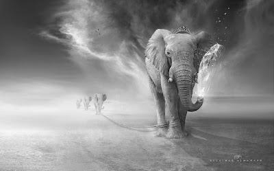 Elephant By Suliman AL Mawash