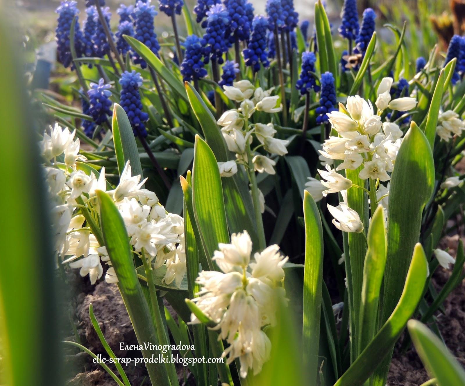 ЕленаVinogradova. Цветы нашего сада #1