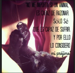 Pets ❤