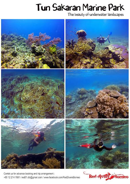 Tahun Melawat Malaysia 2014 Red Divers Borneo