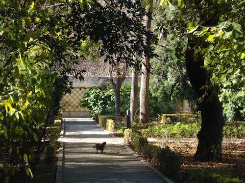 Chic souffl los gatos del jard n bot nico for Ahuyentar a los gatos del jardin