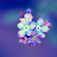 Forget Me Not' border=