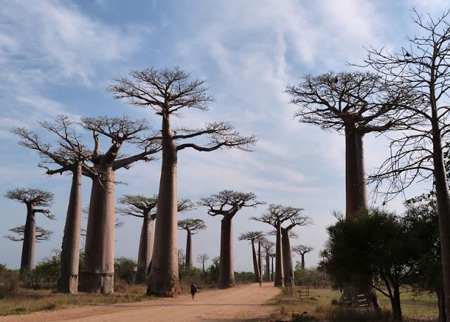 Madagascar – 35 Years Left