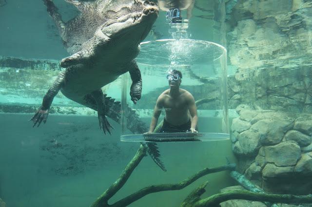 Life Inspired TV Savour Australia darwin aligator crocodile jason godfrey