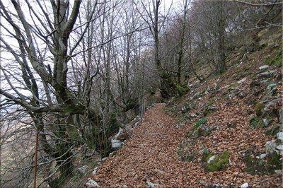 Hayedo de la ladera norte del Hernio