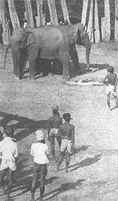 george orwell's shooting an elephant insights Shooting an elephant is an essay by english writer george orwell, first published in the literary magazine new writing in late 1936 and broadcast by the bbc home service on 12 october 1948.