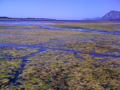 AGRICULTURAL RUN-OFF CAUSING EUTROPHICATION IN THE KLEIN RIVER ESTUARY