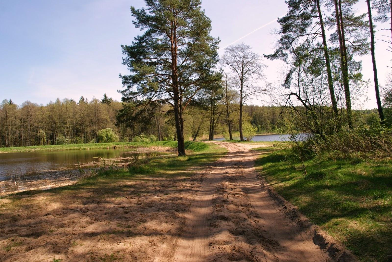 Jezioro Komosa , Puszcza Knyszyńska