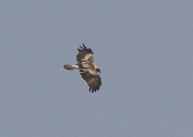 Light Phase, Spain, Costa Blanca, Birding