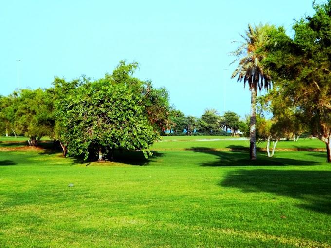 Green park at Al-Corniche