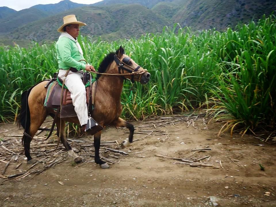 Wm Guayabo Negro