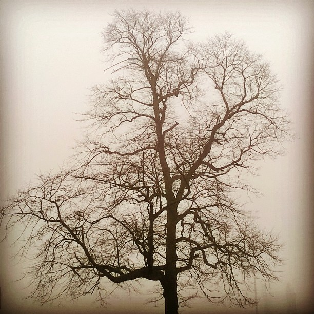 The Gallery : Health And Fitness - Foggy day on Witton Park, Blackburn