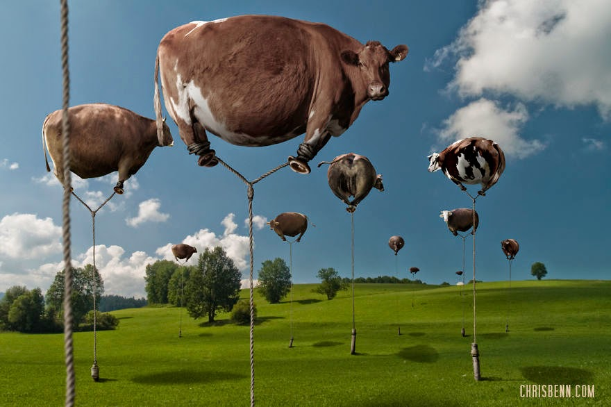 09-Cows-in-a-Field-Chris-Bennett-Animal-Photographs-of-Surreal-Art-www-designstack-co