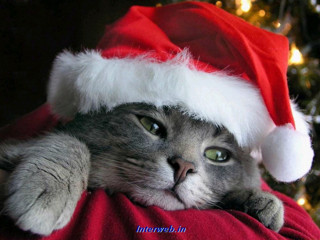 christmas wallpapers amazing wallpapers 3dwallpapers funny wallpapers funny pictures funny animals funny people funny amazing things funny places - Funny Christmas Wallpaper
