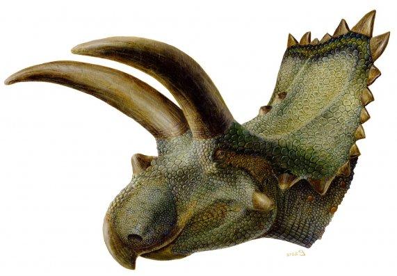 Coahuilaceratops_reconstruction_white.jpg