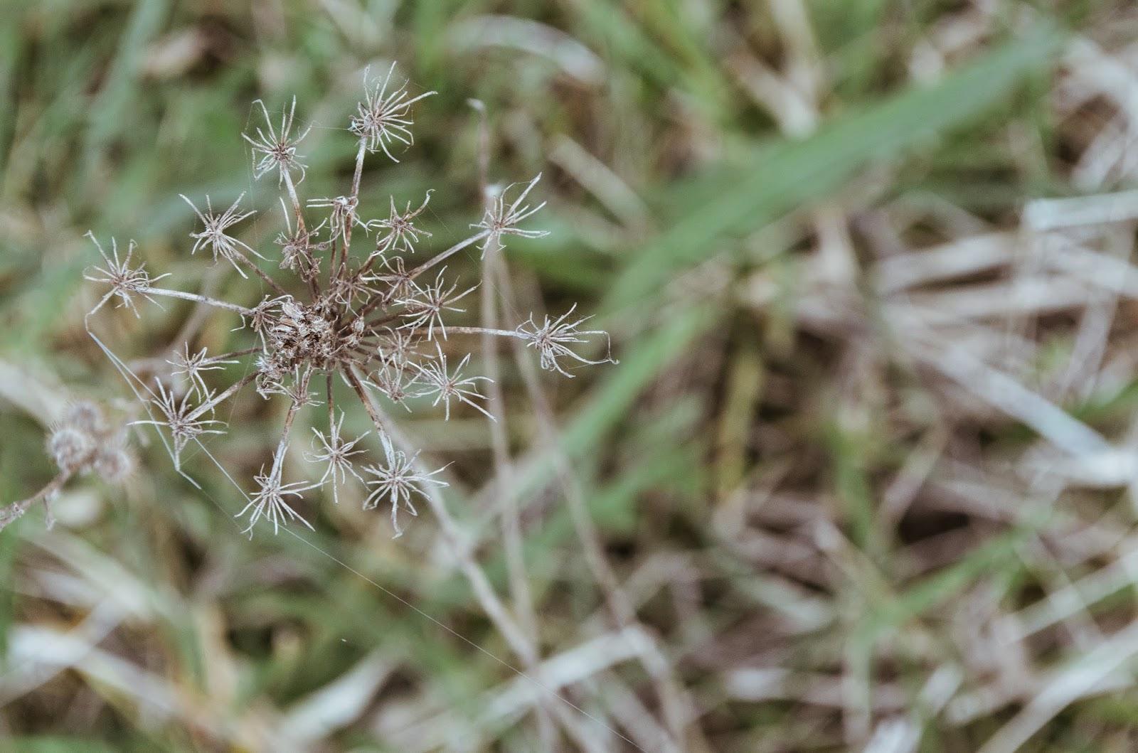 aesthetic fauna // flora