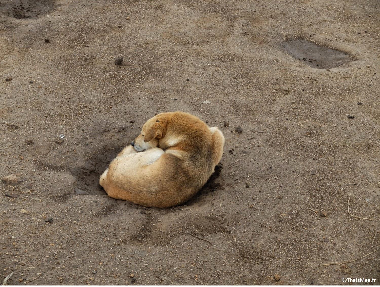 Small Adam's Peak chien dans un trou Sri-Lanka