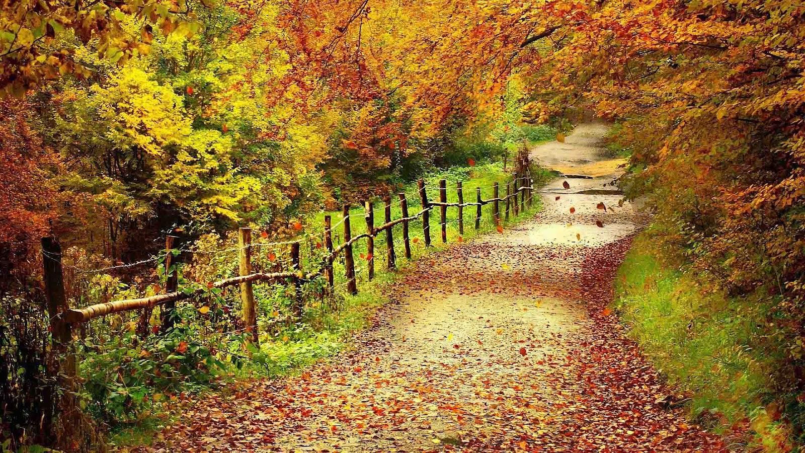 http://4.bp.blogspot.com/-6I8tnq2NzGw/UEXKhsDYMqI/AAAAAAAAGBg/mFOJ9pPN_Gg/s1600/hd-herfst-achtergrond-met-veel-bomen-met-herfstbladeren-wallpaper-foto.jpg