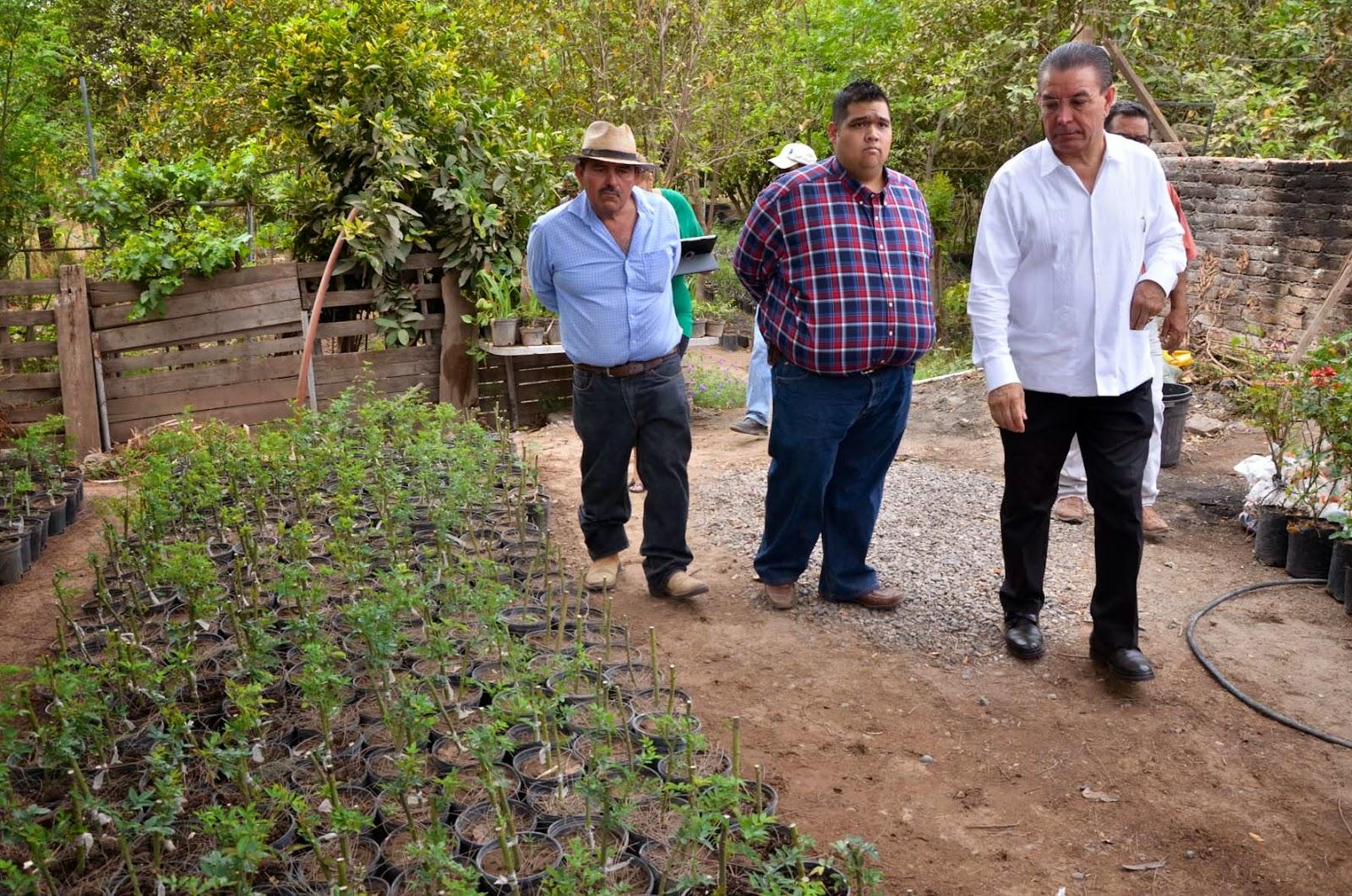 Apoya gobierno municipal proyecto ecol gico en c corit for Proyecto de vivero municipal