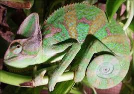 Contoh-contoh Adaptasi Hewan Untuk Melindungi Diri