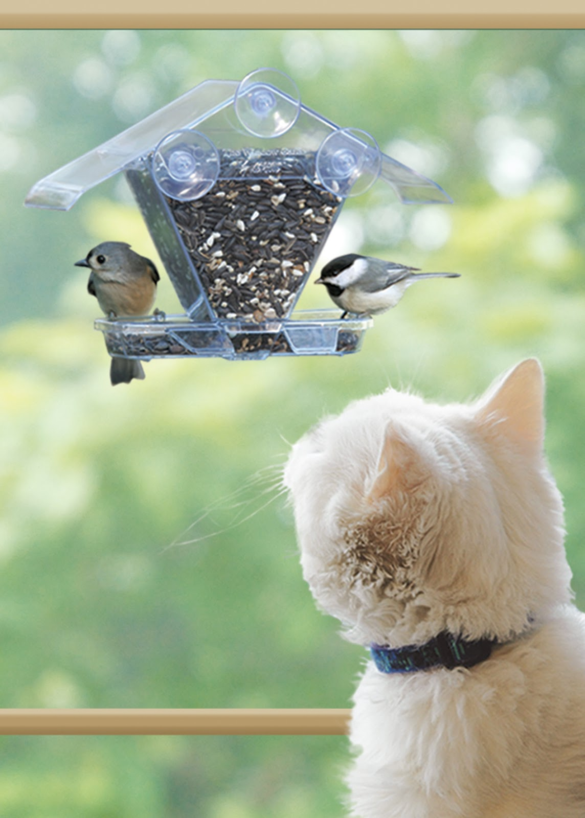 Window bird feeder cat - Saturday July 27 2013