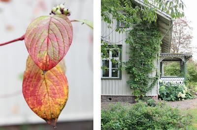 Äppelgården. Foto: Erika Åberg