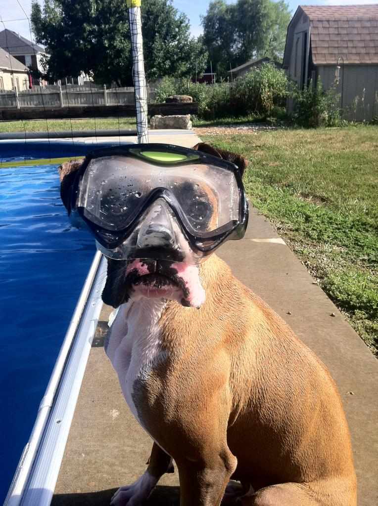 funny animals, dog wears diving goggle