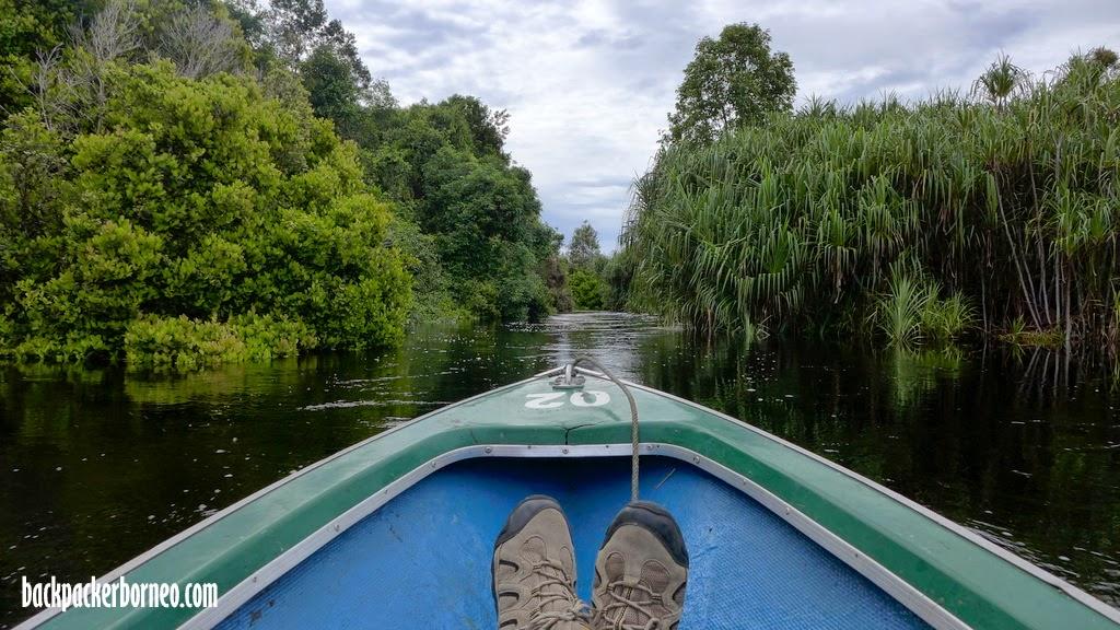 kondisi sungai di taman nasional kalimantan