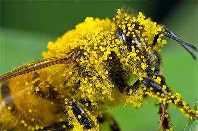 Những tác dụng của phấn ong