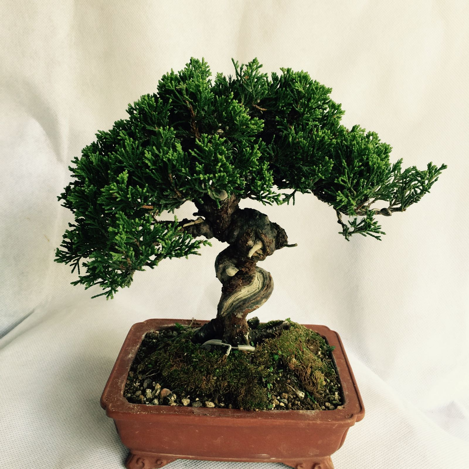 The Arts Of Beautiful Bonsai Lies In Boh39s Bonsai