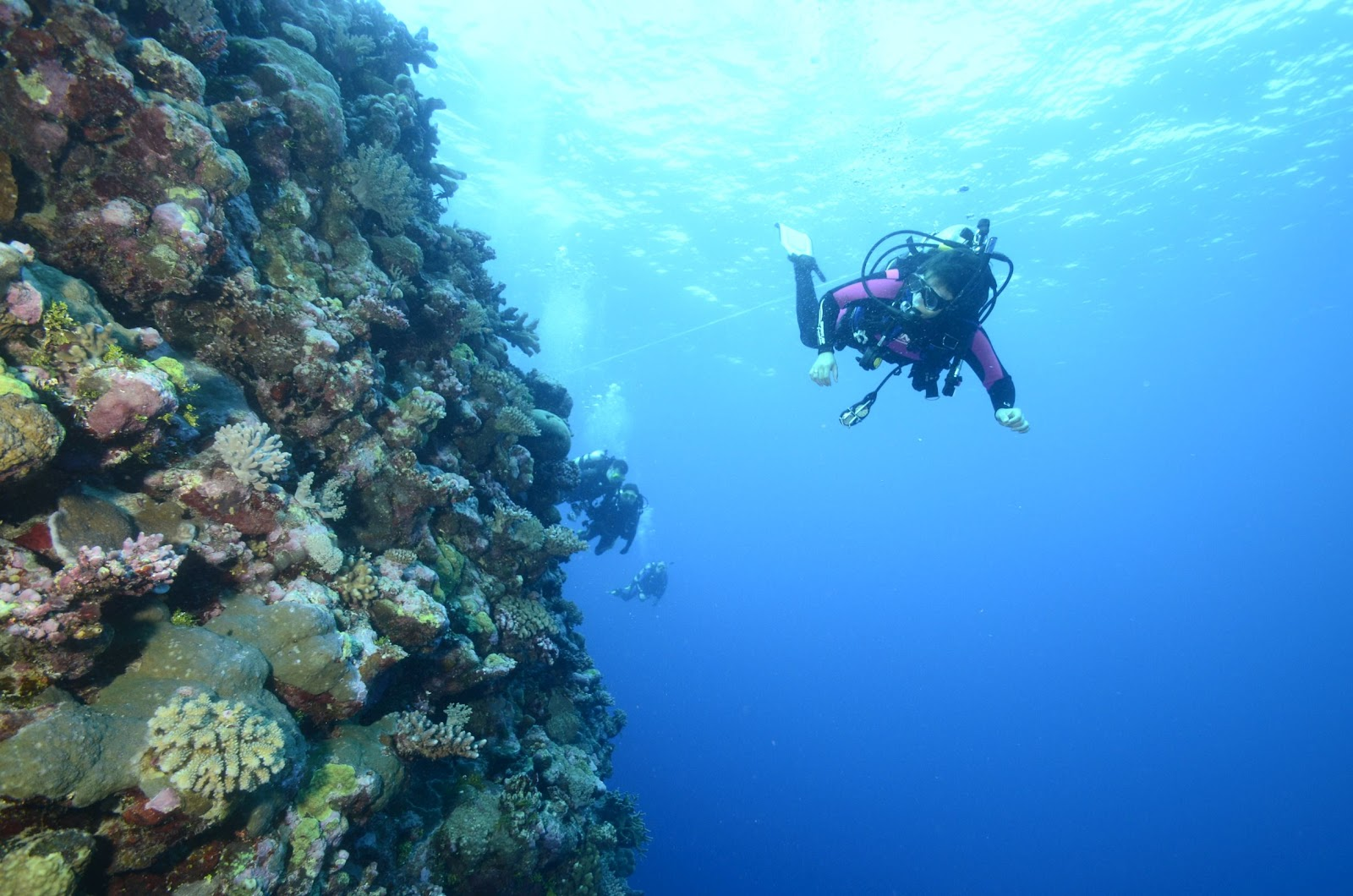Fish tails from down under diving the great barrier reef and osprey reef - Dive great barrier reef ...