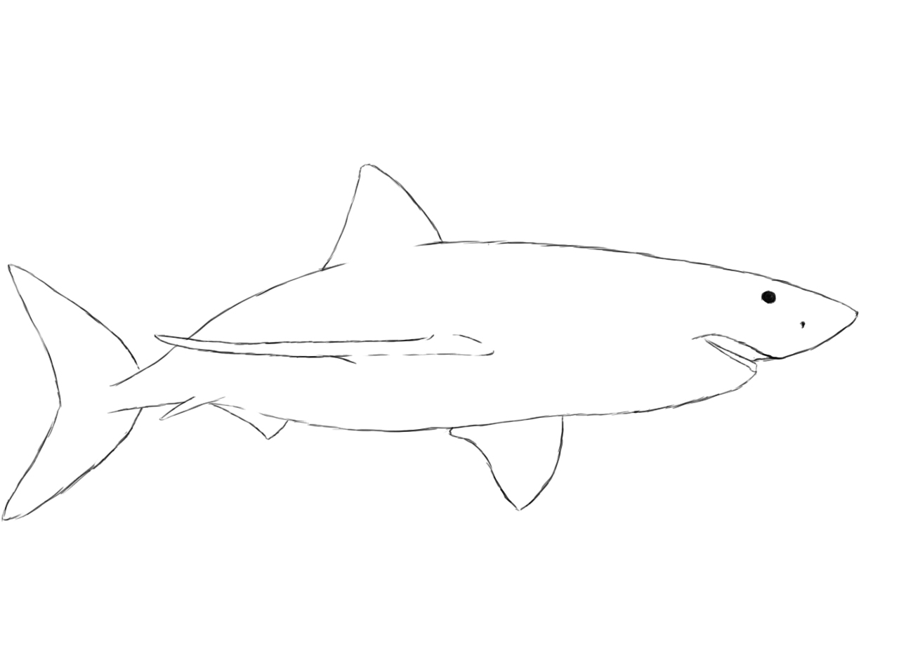 Uncategorized Drawing Of Sharks how to draw a shark central shark