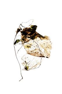 dead-leaf-thin